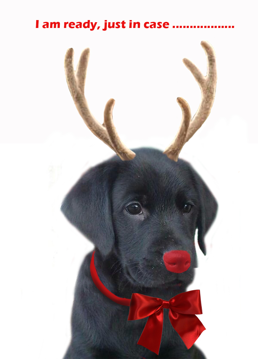 Christmas Dog Replacing Rudolph Free Printable Greeting