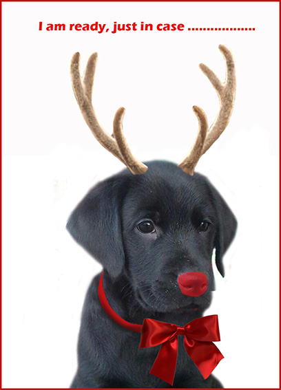 Dog replacing Rudolph