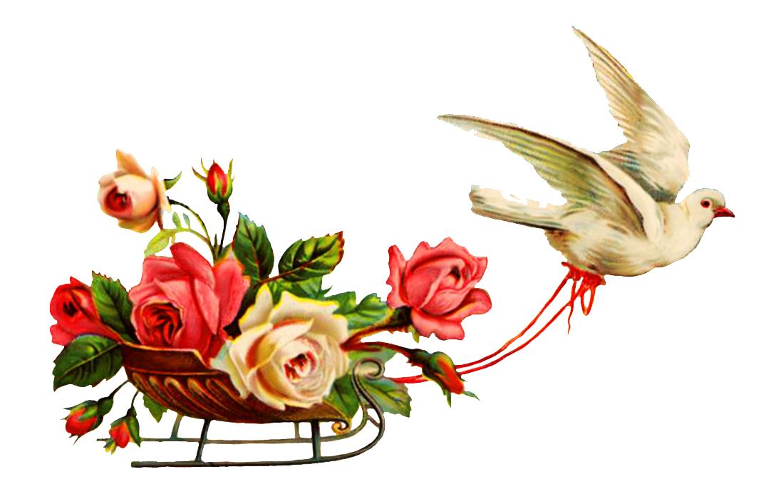 Wedding Clipart Pigeon Flowers