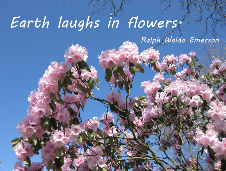 picture quote with flowers and blue sky