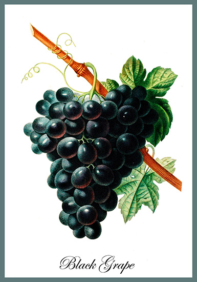 postcard with black grape