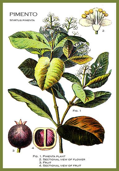 Pimento plant flower card